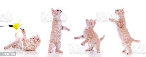 Little cat picture id178367756?b=1&k=6&m=178367756&s=612x612&h=igzclkbf1fuy gckhxkwxoh xs xtmq2tw1ieqj4bum=