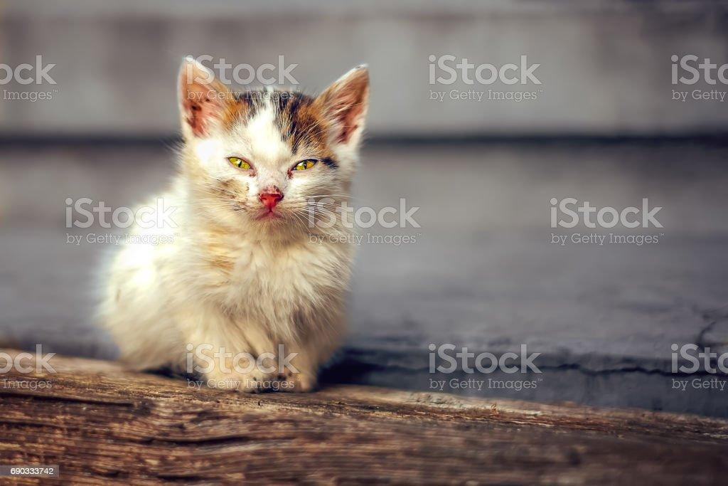 Little cat - foto de stock