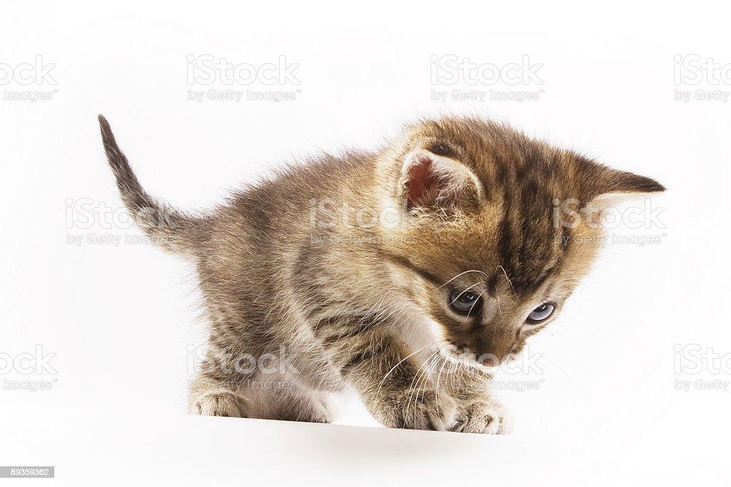 Little cat royalty free stockfoto