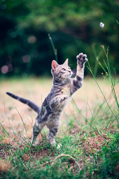 Little cat playing in the garden picture id1067703196?b=1&k=6&m=1067703196&s=612x612&w=0&h=7mozszon27a6m oofqc8uylj8hkbxpn7vmopsrqhdk4=