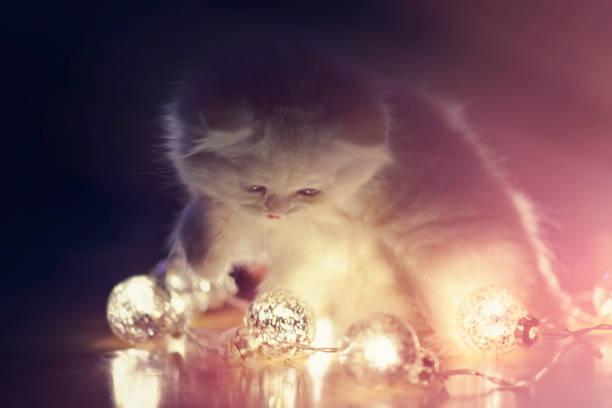 Little cat playing with christmas lights picture id1037357760?b=1&k=6&m=1037357760&s=612x612&w=0&h=sigvhu5nretqtakikhnx75xrwiellaxibea5tzvklpe=