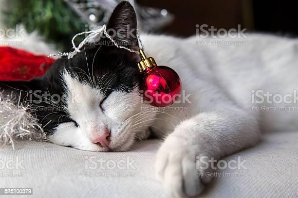 Little cat sleeping next to the christmas tree picture id525200379?b=1&k=6&m=525200379&s=612x612&h=lvj 0jrdoyscgu smzi832e5mbaibimlmyvcj9oseyw=