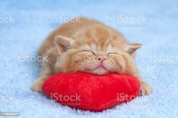 Little cat sleeping on the red heartshaped pillow picture id178055972?b=1&k=6&m=178055972&s=612x612&h=on4aiyilssfsjm5vgkpvhjgfjvajnodcrxhzvmvbm u=