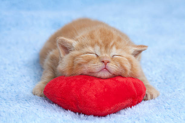 Little cat sleeping on the red heartshaped pillow picture id178055972?b=1&k=6&m=178055972&s=612x612&w=0&h=jxnbyfmw8kaal8lptk3zmlcgln4pvh0vqhh6kxrgcom=