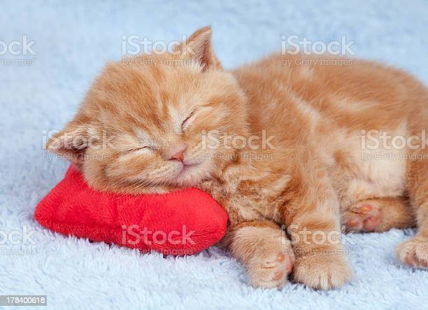 Little cat sleeping on the red heartshaped pillow picture id178400618?b=1&k=6&m=178400618&s=612x612&h=w9l ob tg4d5mmfhnpe1 689jtm42kleitv58i3xr4w=