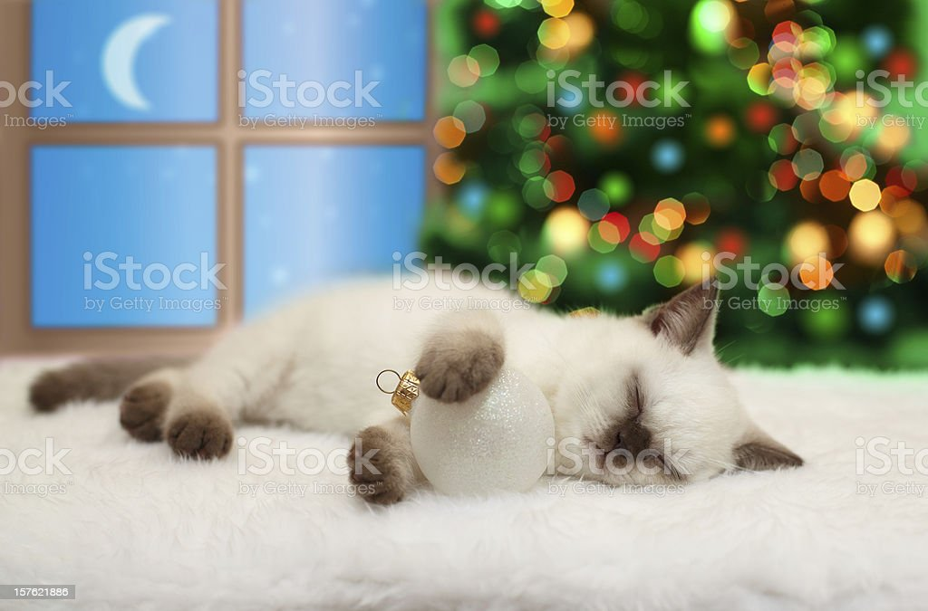 Little cat sleeping royalty-free stock photo