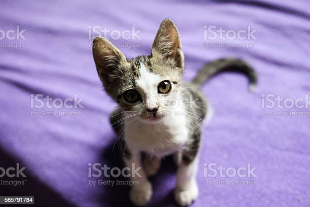 Little cat staring in camera picture id585791784?b=1&k=6&m=585791784&s=612x612&h= msv0 w6gs he4bn1ljjzt bhmsoipancxnbulywn8a=