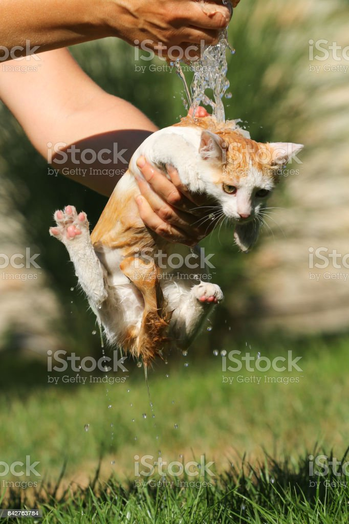 Little cat take a summer bath stock photo