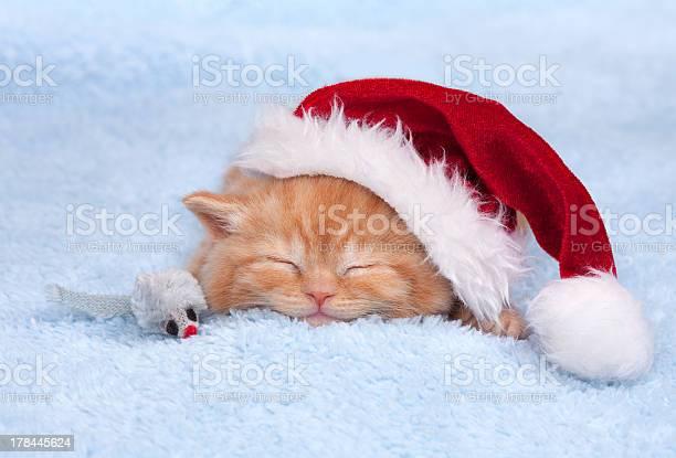Little cat wearing santanas hat sleeping picture id178445624?b=1&k=6&m=178445624&s=612x612&h=izxddijooclsi2ksujn3x2sinxfciu7umelcfdtaxn4=