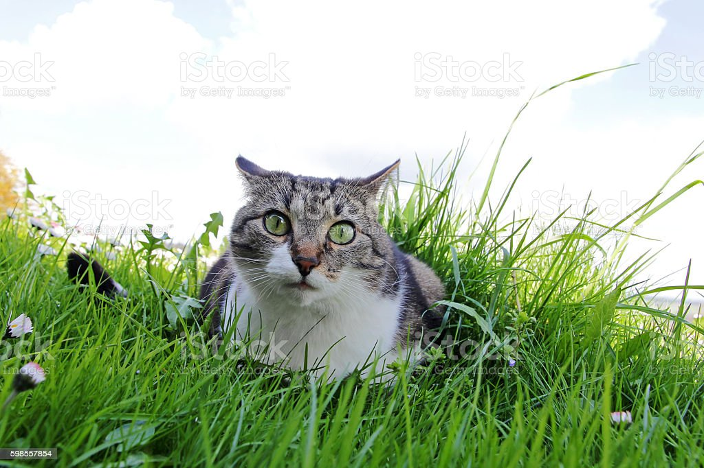 little cat with a funny peculiar views stock photo