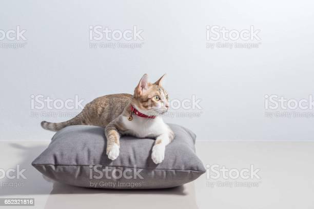 Little cat5 picture id652321816?b=1&k=6&m=652321816&s=612x612&h=nvj8y322fzdjmgs8kq0z3brwgbl2uw4o0xc0hkothfk=
