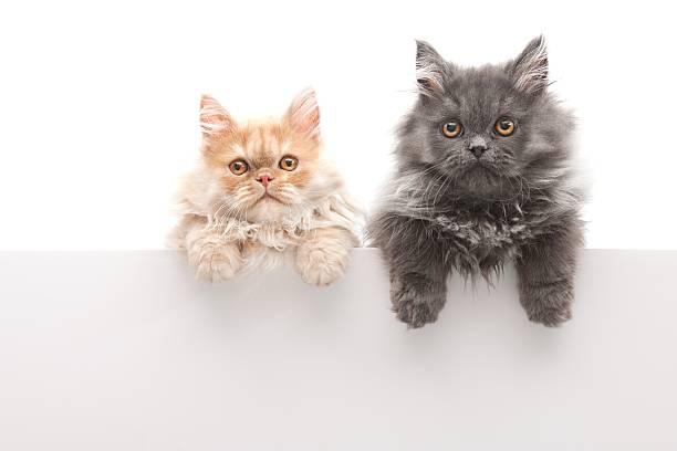 Little cats picture id157682491?b=1&k=6&m=157682491&s=612x612&w=0&h=tnavyz7x9p2bpq 6brdneivdbv0btwcy5ja0tkuxrz8=