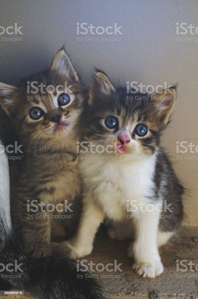 Little cats standing near a wall. royalty-free stock photo