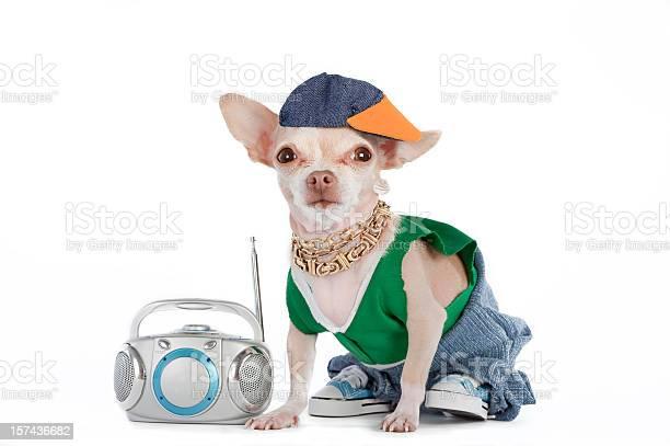 Little chihuahua dog dressed like a rapper with a boombox picture id157436682?b=1&k=6&m=157436682&s=612x612&h=bnq2zznvoal3dz0earifke9y 58xosryzosdnhwy2w8=