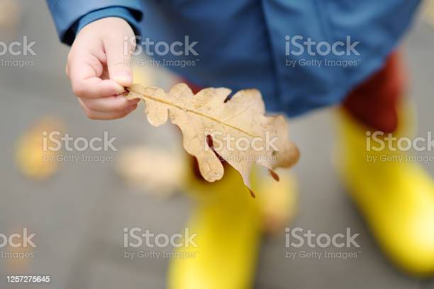 Photo of Little child examining a drops of water on fallen oak leaf. Kid exploring nature. Activity for inquisitive child.