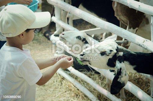 Little child feeding a goat : Closeup