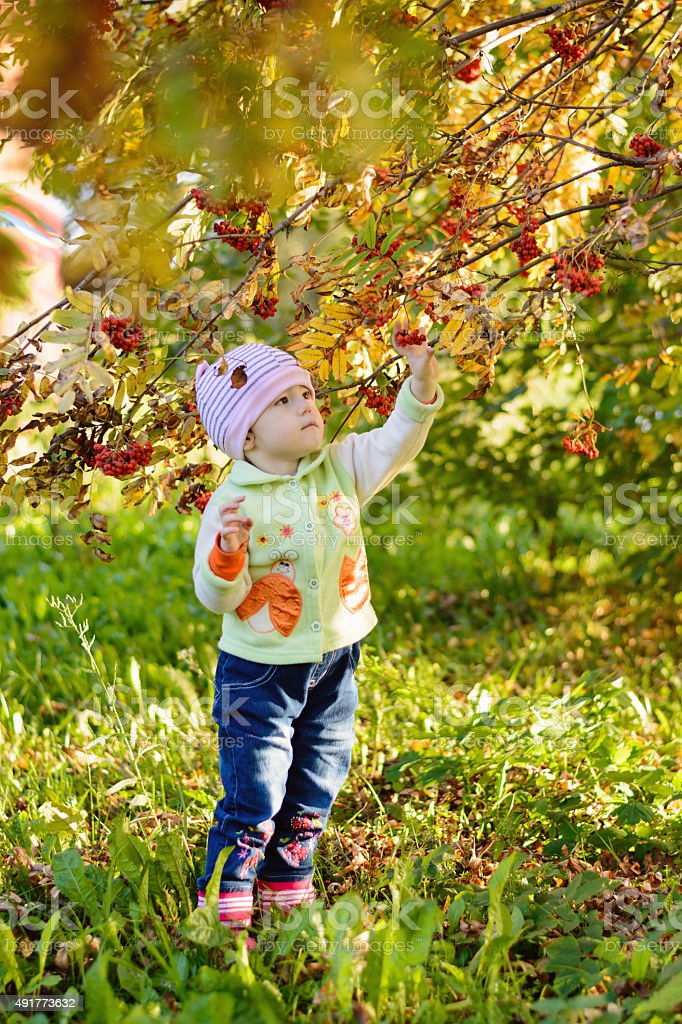 Little child is going to mountain ash in the park stock photo