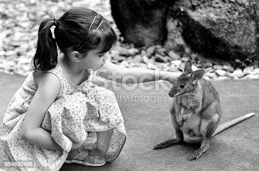 Little child (girl age 5-6) petting a Yellow-footed rock-wallaby in  Queensland, Australia. It appears on the IUCN Red List of Threatened Species .