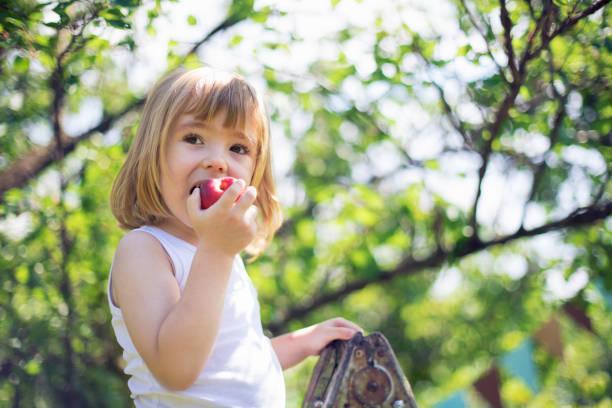 little child picking peaches - pesche bambino foto e immagini stock