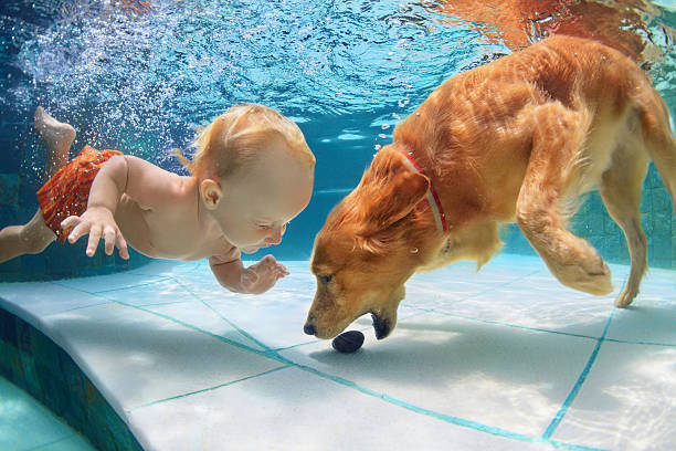 Little child swim underwater and play with dog picture id526275372?b=1&k=6&m=526275372&s=612x612&w=0&h=mi4x8kwvdvgmlvxsodv0uxjahfl2m7xdapvldkkngzm=