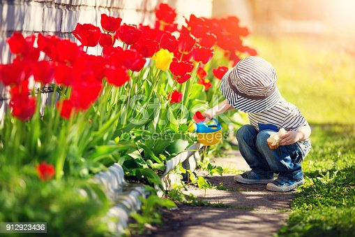Little child walking near tulips on the flower bed in beautiful spring day. Baby boy outdoors in the garden with watering can