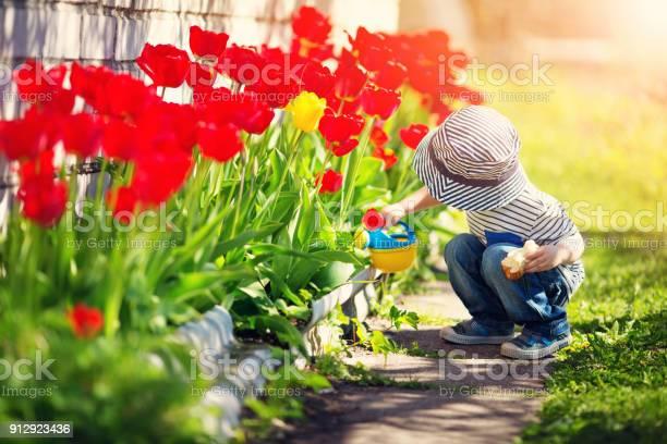 Little child walking near tulips on the flower bed in beautiful day picture id912923436?b=1&k=6&m=912923436&s=612x612&h=rfqjrq0dbtubo t5 ztwvqbx xocr8y445ptbhyylos=