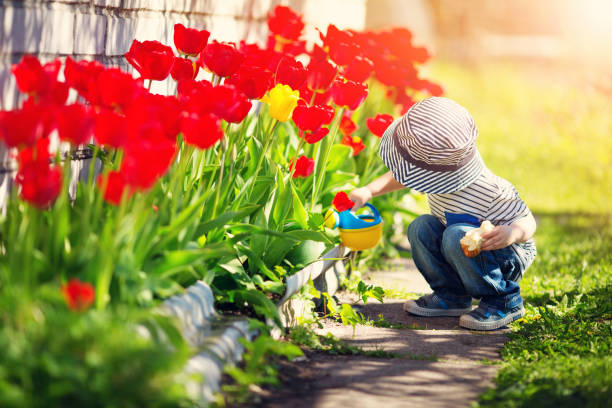 Little child walking near tulips on the flower bed in beautiful spring day Little child walking near tulips on the flower bed in beautiful spring day. Baby boy outdoors in the garden with watering can springtime stock pictures, royalty-free photos & images