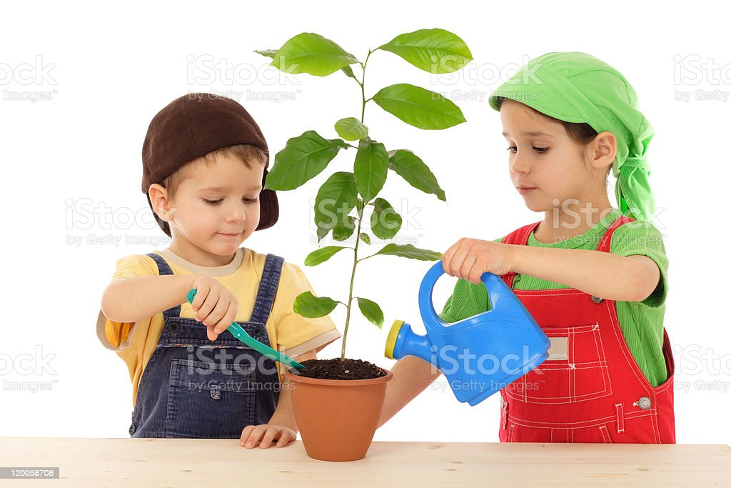 Little children caring for plant royalty-free stock photo