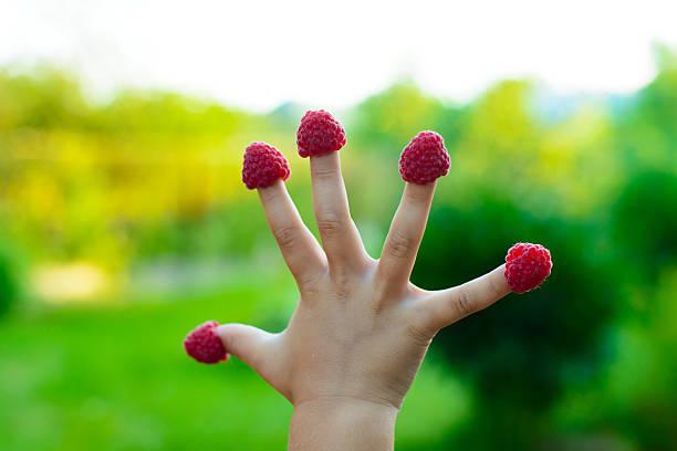 Petit enfant avec des framboises la main - Photo