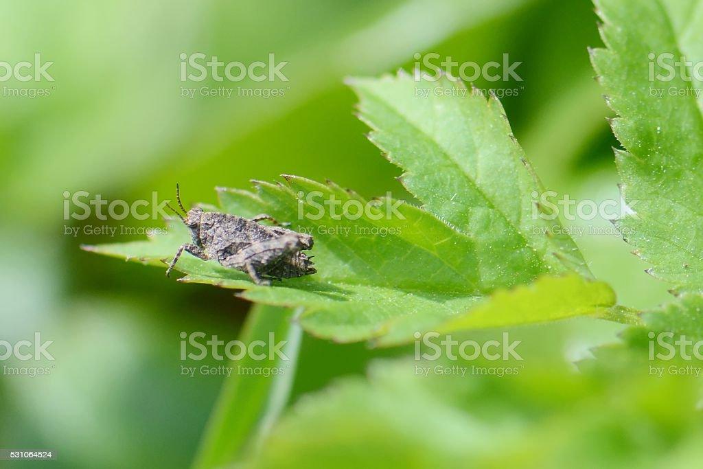 little cicada, macro stock photo