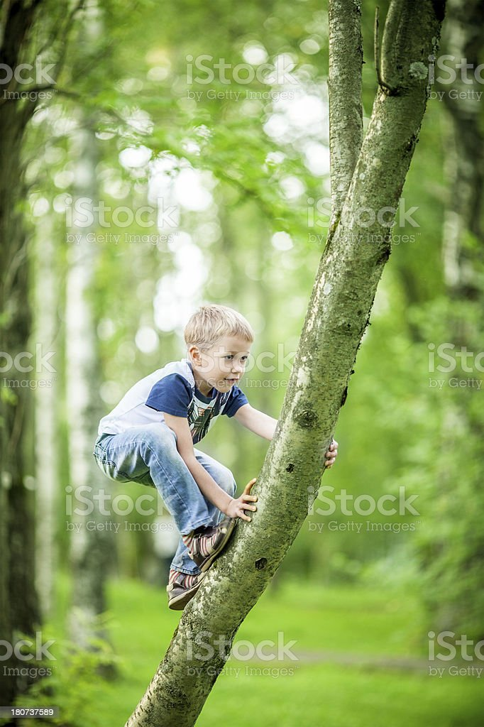 Little climber royalty-free stock photo