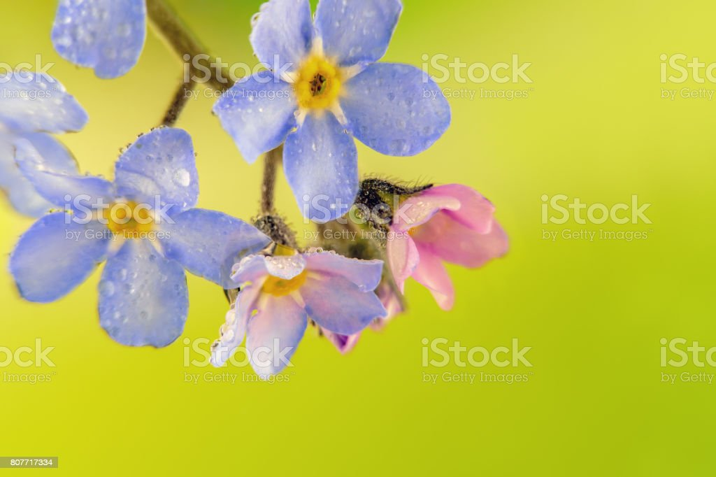 little colorful flowers with water droplets stock photo