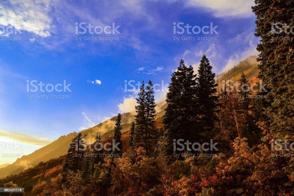 Little Cottonwood Treeline photo libre de droits