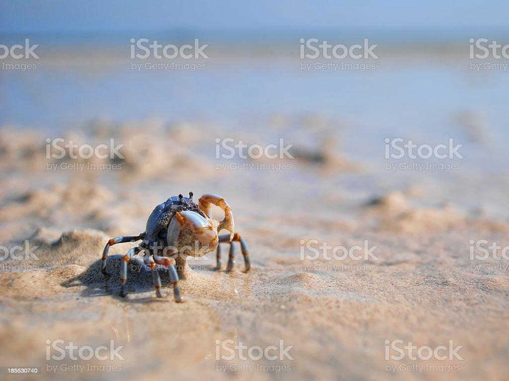 Little Crab stock photo