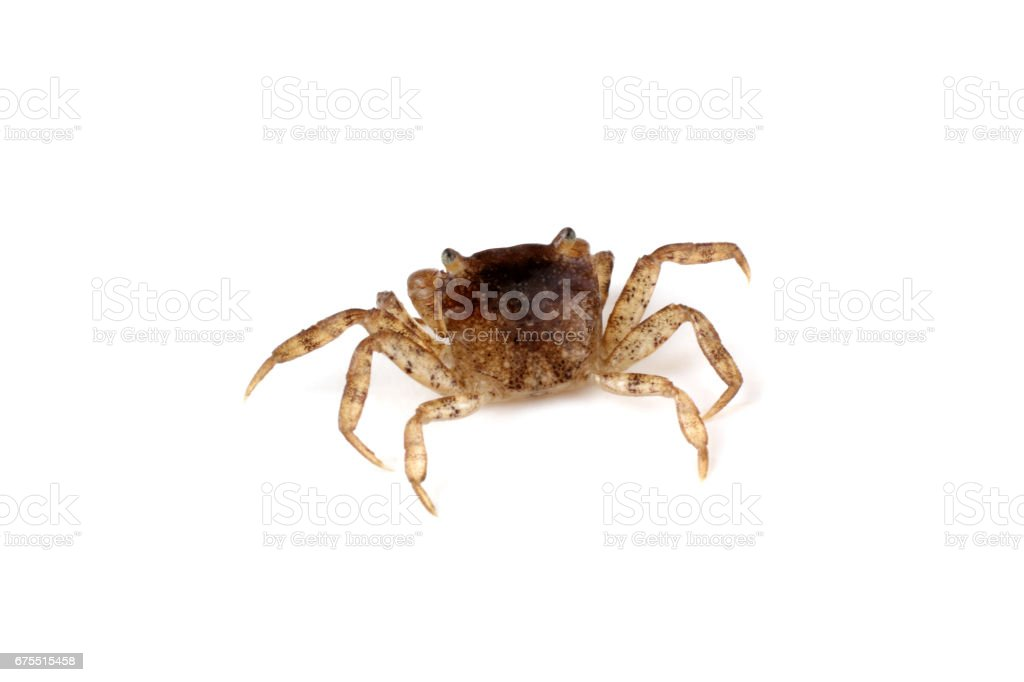 Little crab royalty-free stock photo