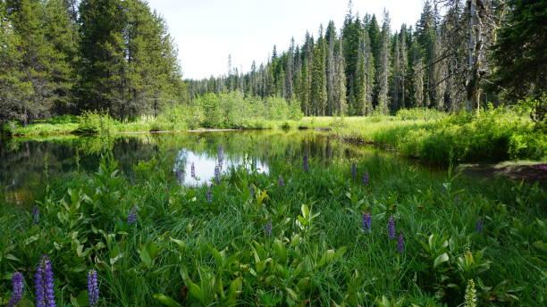 Little Crater Lake near Mount Hood Oregon stock photo