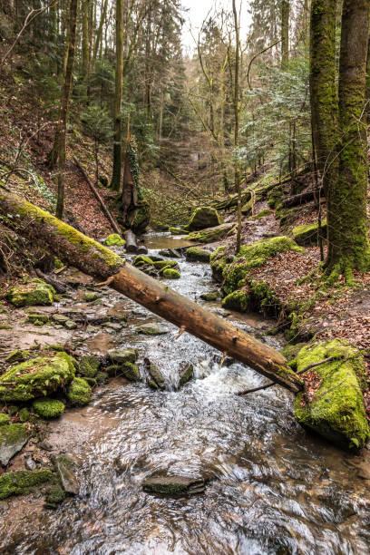 Kleiner Bach die Schlucht hinunter in der Mitte des grünen Waldes – Foto