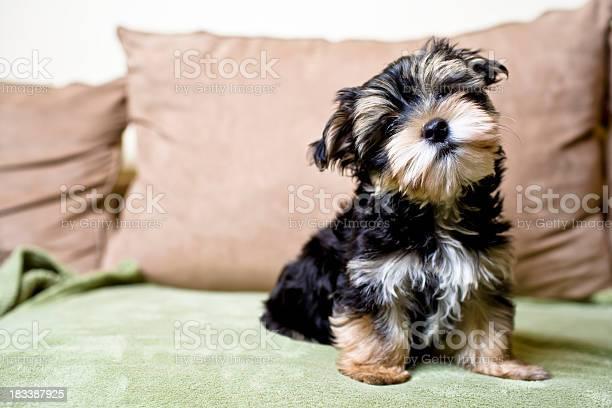 Little curious puppy picture id183387925?b=1&k=6&m=183387925&s=612x612&h=fkxsusvtkqxe45qfbab2za2bkm 5eb3ghiewd3tnvom=