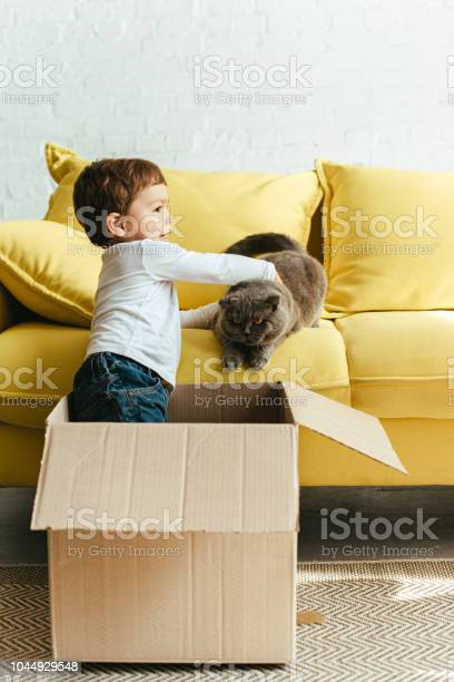 Little cute boy playing with cat in cardboard box at home picture id1044929548?b=1&k=6&m=1044929548&s=612x612&h=ixhhopnpaxn epp3jf 1ane1v1tddh utr8kmylce94=