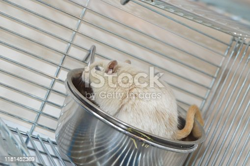 1206982378 istock photo Little cute hamster climbed into his bowl sitting in a cage, humor 1181452369