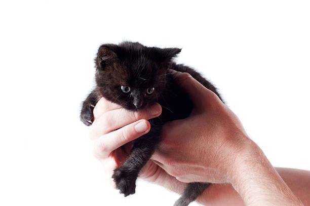 Little cute kitten picture id106457798?b=1&k=6&m=106457798&s=612x612&w=0&h=gzjkzjb4ylgna8zyzn0reoyc4wquopvix1i7rrd57ei=