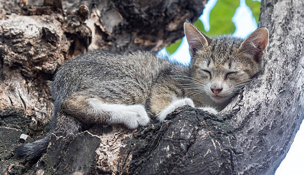 Little cute kitten sleep on tree picture id497191088?b=1&k=6&m=497191088&s=612x612&w=0&h= wob7 eu7nwmwntoixsldo0nati1ncbcqebvykvnfce=