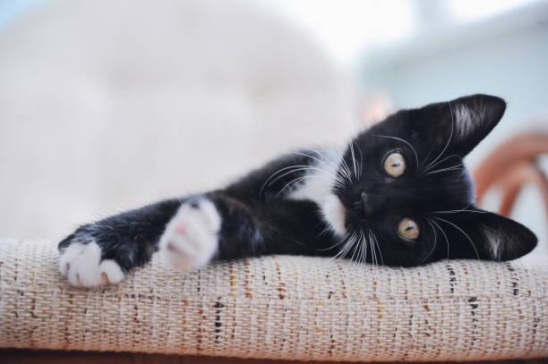 Little cute playful domestic kitten picture id1069804146?b=1&k=6&m=1069804146&s=612x612&w=0&h=frw vhrs768zhswqpejwtld vszoi v4pql3vpcmpae=