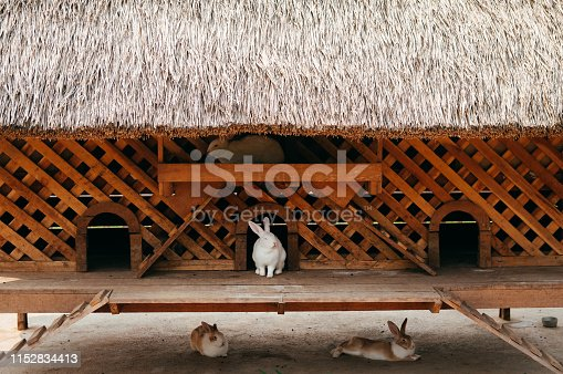 Little cute white rabbits in wooden cage with thatched roof in local animal farm