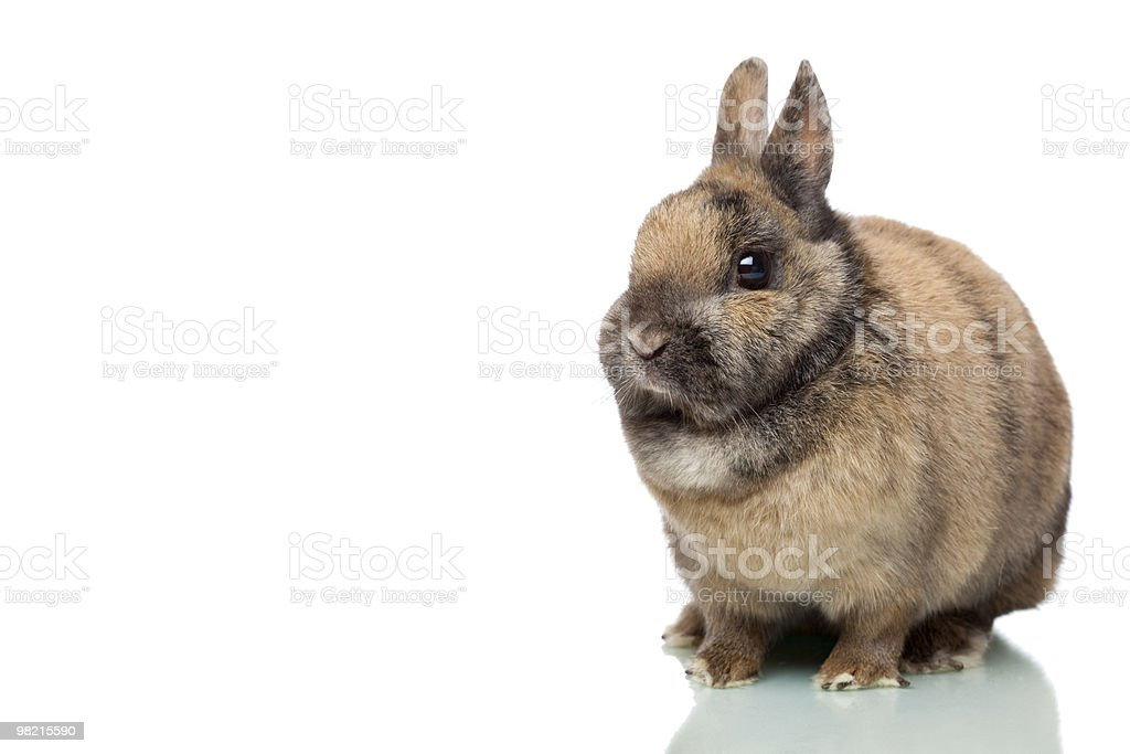 Little cute young Easter bunny isolated on white background royalty-free stock photo
