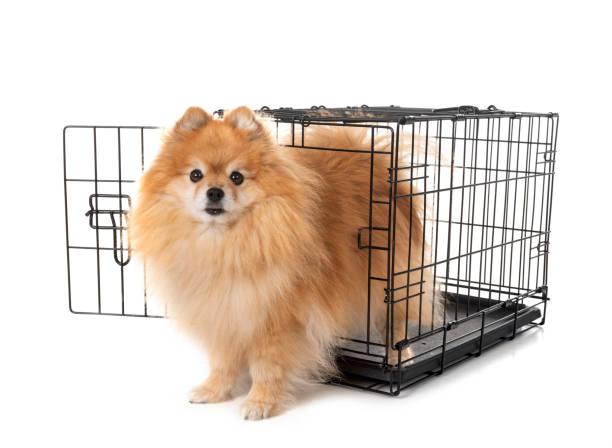 kleiner hund und käfig - holzkiste stock-fotos und bilder