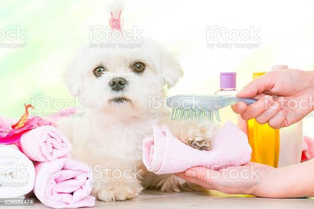 Little dog at spa picture id536684474?b=1&k=6&m=536684474&s=612x612&h=yxjldy76zp5zc2al9gevvsvls2he 4iwgzfbehp1nhg=