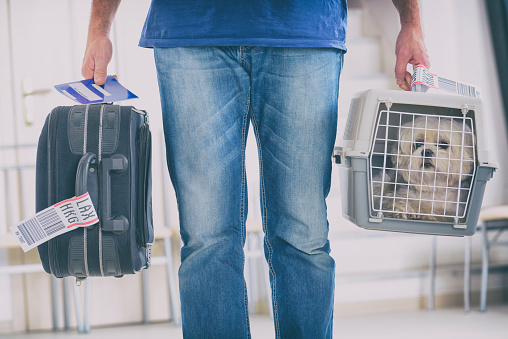 little dog in the airline cargo pet carrier at the airport after a long journey
