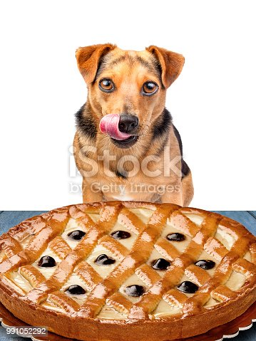 little dog looking at delicious pie and licking his chops isolated