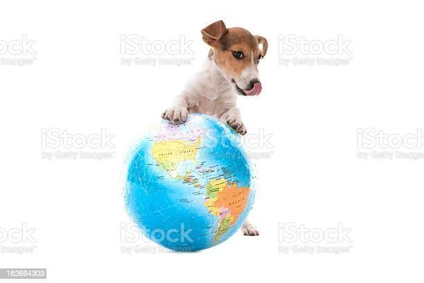 Little dog picture id182664303?b=1&k=6&m=182664303&s=612x612&h=xedhkvlptxujkltirwy5kvmztlfecnzxbq kq42zvxs=